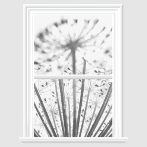 dandelion Decorative Window Film