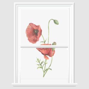 Poppy Decorative Window Film