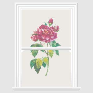 Rose Decorative Window Film